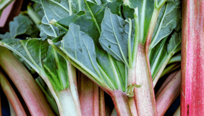 rhubarb helps you poop